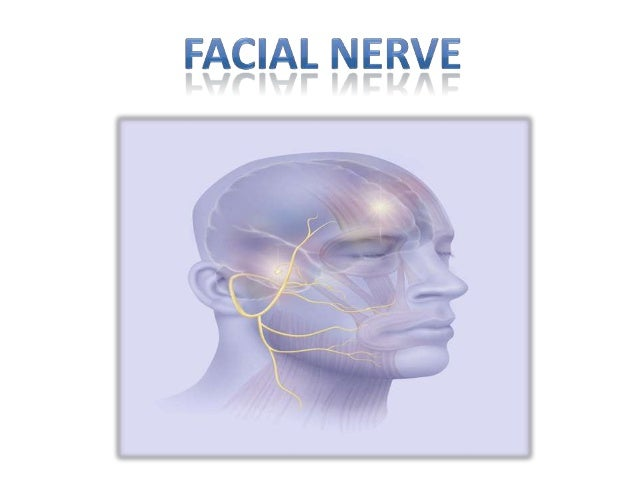 ANATOMY AND PHYSIOLOGY  The facial nerve consists of a motor and a sensory part, the latter being frequently described un...