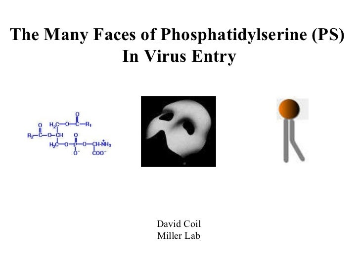 The Many Faces of Phosphatidylserine (PS)  In Virus Entry David Coil Miller Lab