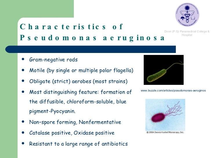 yersinia enterocolitica colonies on endo agar