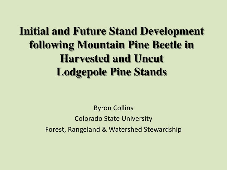 Initial and Future Stand Development following Mountain Pine Beetle in Harvested and Uncut Lodgepole Pine Stands<br />Byro...