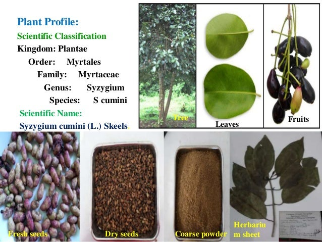 thesis on antidiabetic activity Thesis details full study of possible mechanism of action of medicinal plants having anti-diabetic antidiabetic and antioxidant activity of a herbal.