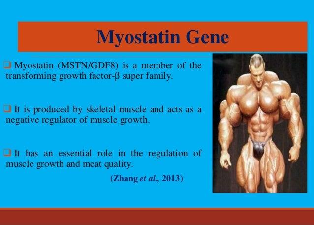 Myostatin (MSTN) and its Applications in Animal Breeding