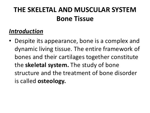 THE SKELETAL AND MUSCULAR SYSTEM Bone Tissue Introduction • Despite its appearance, bone is a complex and dynamic living t...