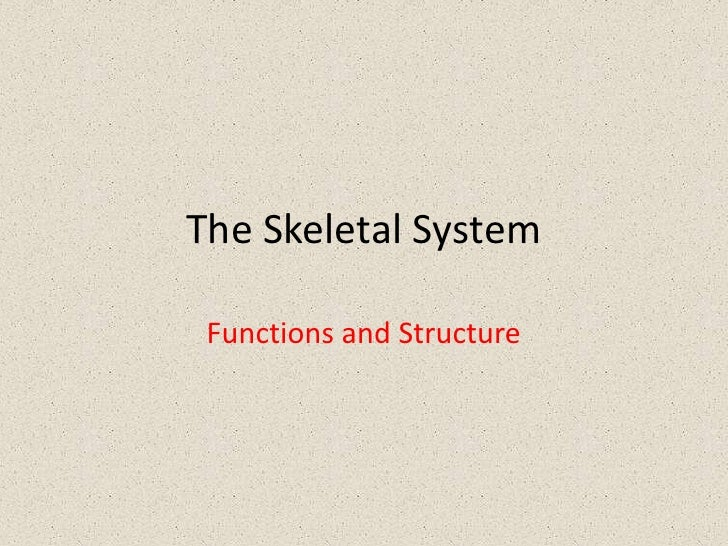 The Skeletal System Functions and Structure