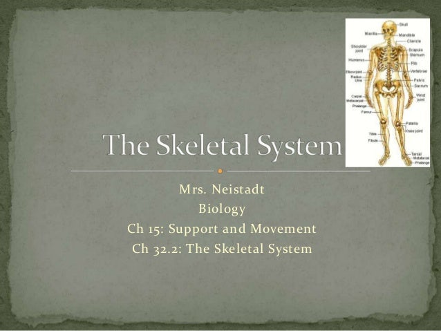 Mrs. Neistadt           BiologyCh 15: Support and MovementCh 32.2: The Skeletal System