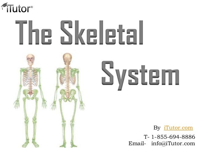 The SkeletalSystemT- 1-855-694-8886Email- info@iTutor.comBy iTutor.com