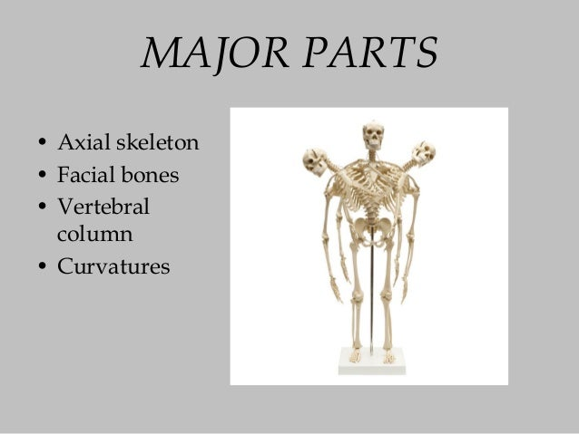 The skeletal system power point