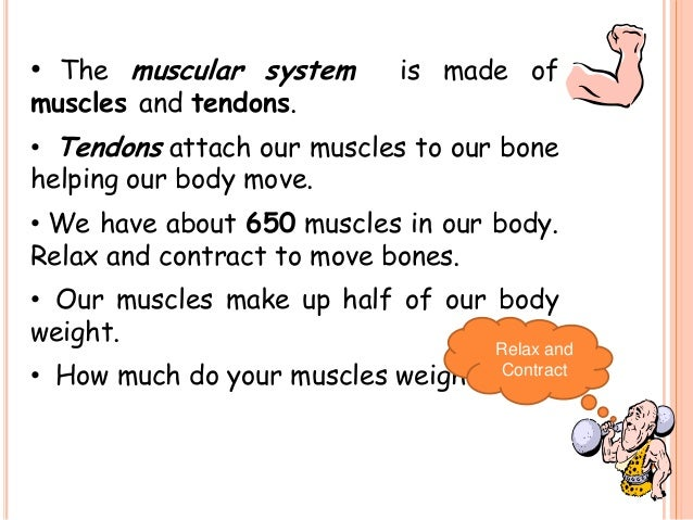 the skeletal system & the muscular system, Muscles