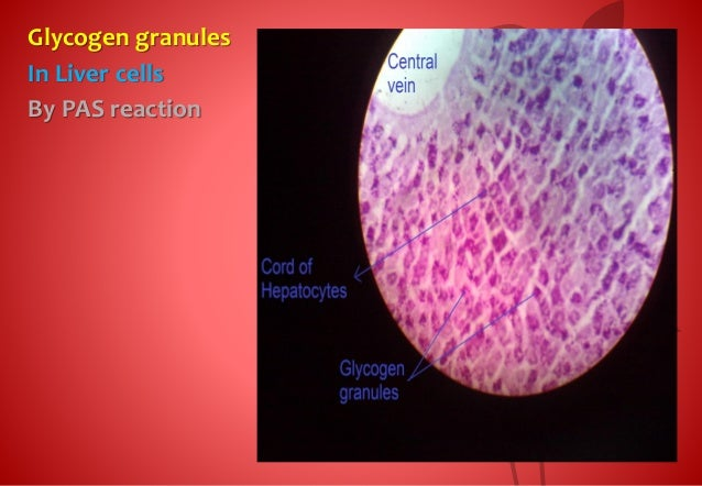 Histology slides 1st grade
