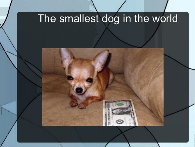 The smallest dog breed in the world - photo#21