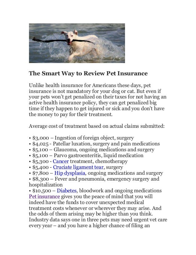 The smart way to review pet insurance