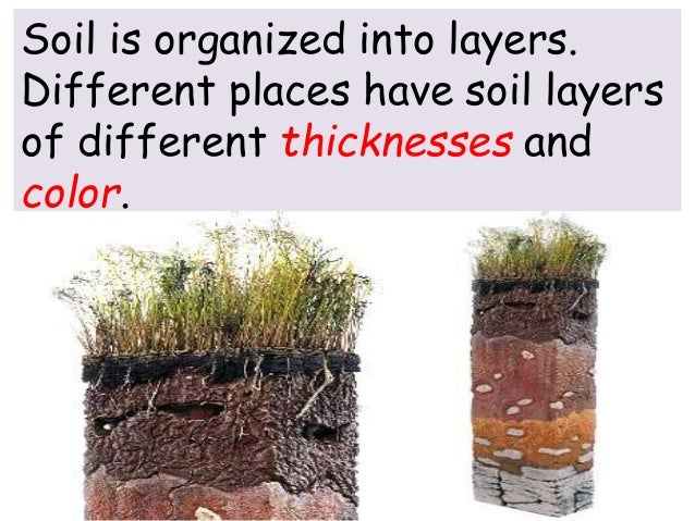 The soil for What are the four layers of soil