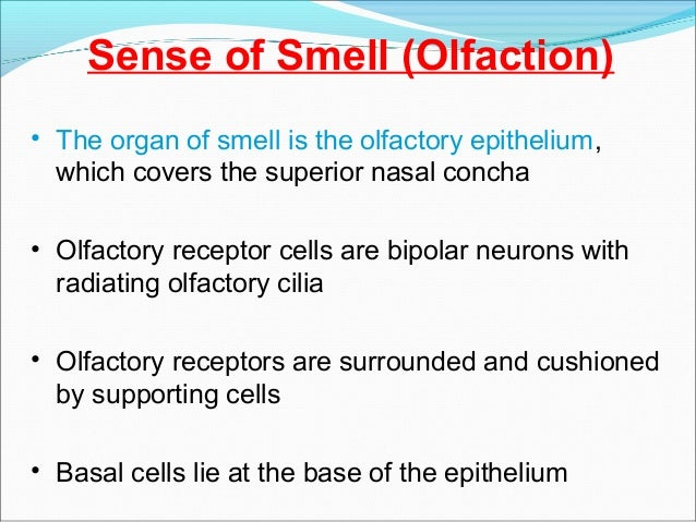 special sense organs (anatomy and physiology) - a brief discussion