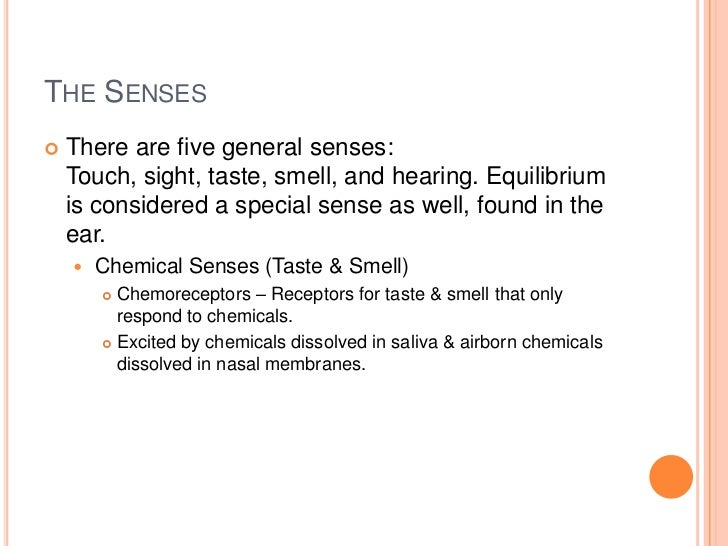 The special senses ~ powerpoint by victoria