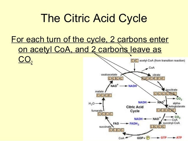ap bio ch 9 15 Quizzes science biology mitosis and meiosis mitosis and meiosis - chapters 12-13 - ap biology 15 if the cell whose.
