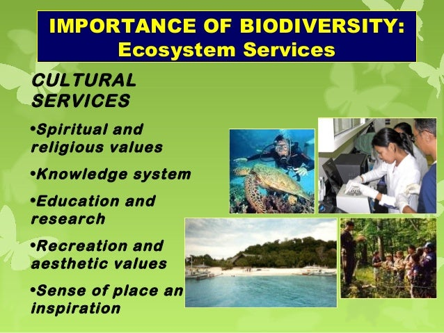 the importance of ecosystem services to mankind Conservation of ecosystem services during the past two decades wide acceptance of the importance of ecosystem services for the well-being of mankind has developed, not only amongst conservationists but also amongst such groups as planners, agriculturists and economists.
