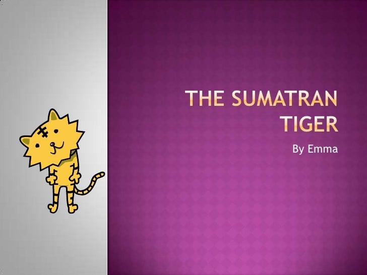 The Sumatran Tiger<br />By Emma<br />