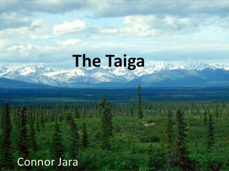 The TaigaConnor Jara