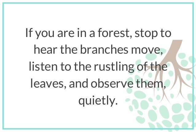 If you are in a forest, stop to hear the branches move, listen to the rustling of the leaves, and observe them, quietly.
