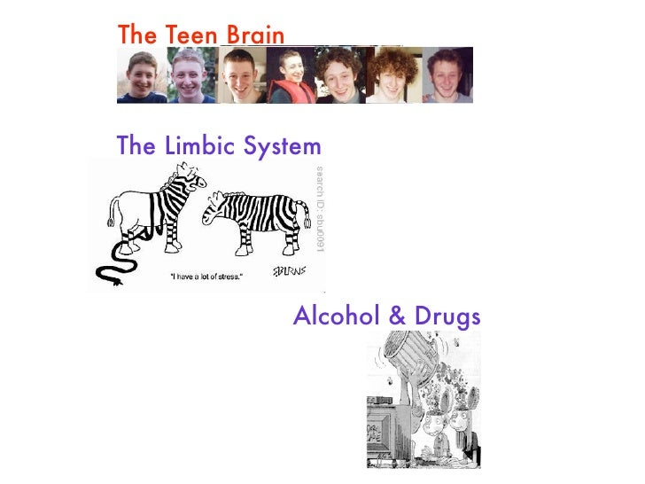 The Teen Brain    The Limbic System                      Alcohol & Drugs
