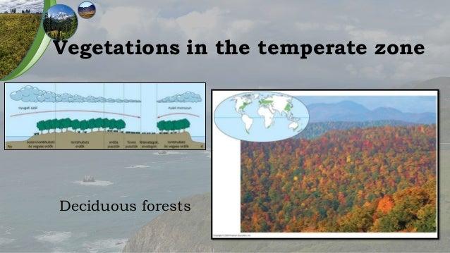 The temperate zone coniferous forests grasslands altavistaventures Choice Image