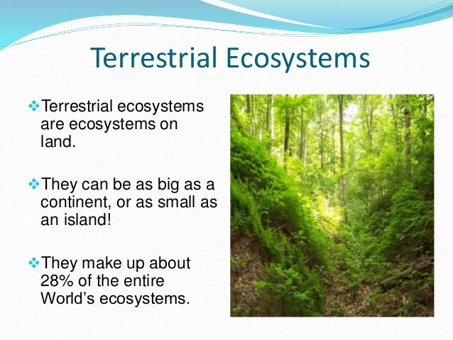 Examples Of Terrestria...