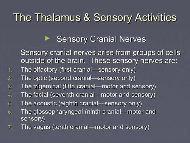 The Thalamus & Sensory Activities              ►   Sensory Cranial Nerves      Sensory cranial nerves arise from groups of...