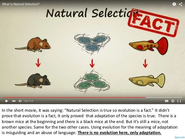What Are Two Limits To Evolution By Natural Selection