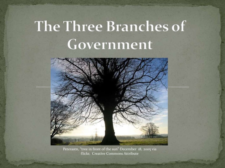 "The Three Branches of Government<br />Peterastn, ""tree in front of the sun"" December  18, 2005 via flickr,  Creative Commo..."