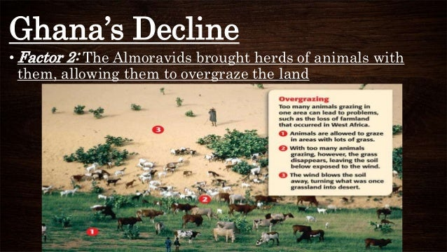Ghana's Decline • Factor 2: The Almoravids brought herds of animals with them, allowing them to overgraze the land