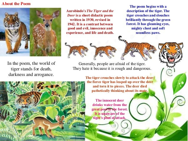 The tiger and the deer essay