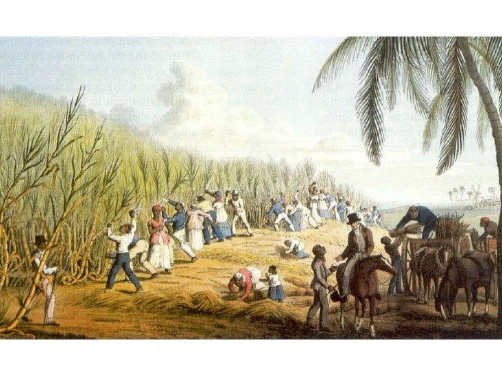the transatlantic slave trade 6