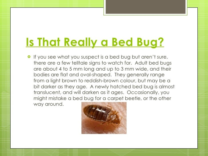 What Are Bed Bugs Attracted To The truth about bed bugs