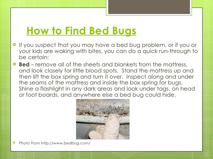 The truth about bed bugs How to buy a bed