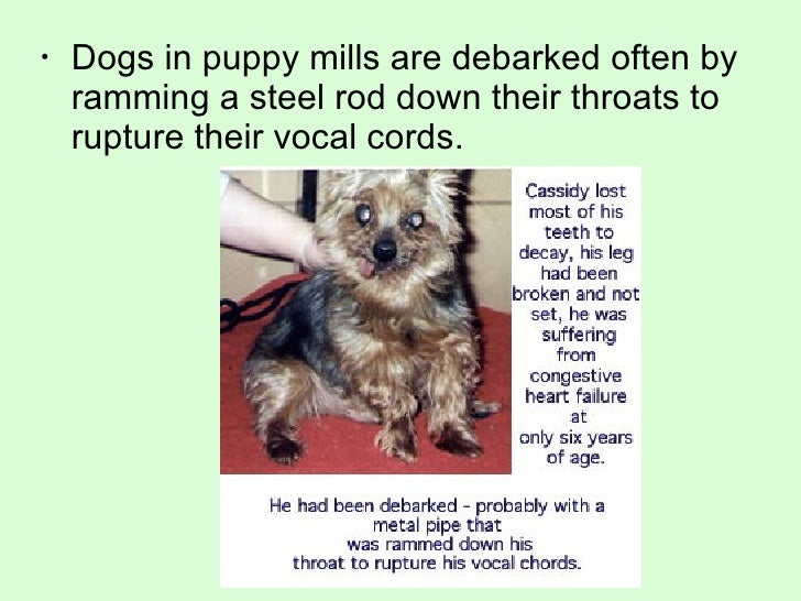 How Many Dogs Die In Puppy Mills
