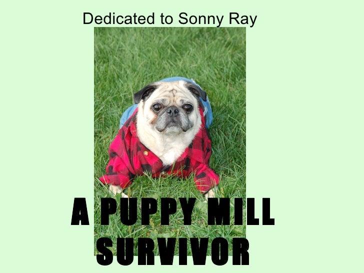 informative speech on puppy mills
