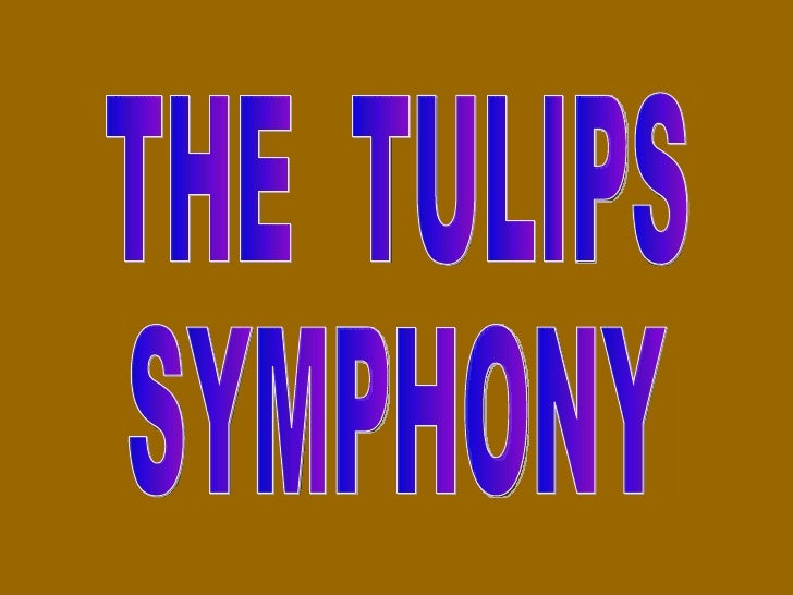 THE  TULIPS SYMPHONY