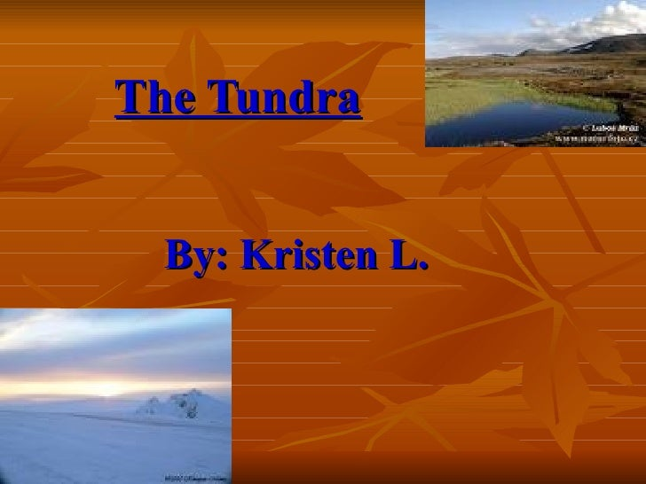 The Tundra       By: Kristen L.