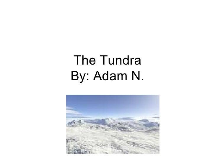 The Tundra By: Adam N.