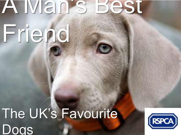 A Man's BestFriendThe UK's FavouriteDogs