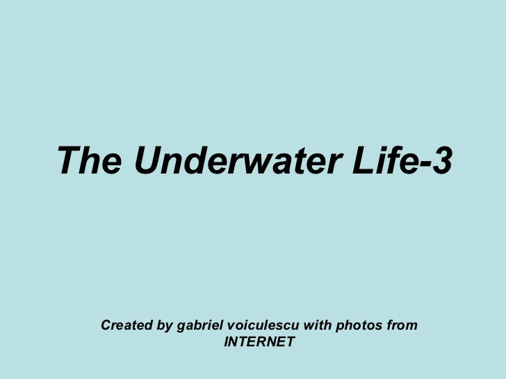 The Underwater Life-3 Created by gabriel voiculescu with photos from INTERNET
