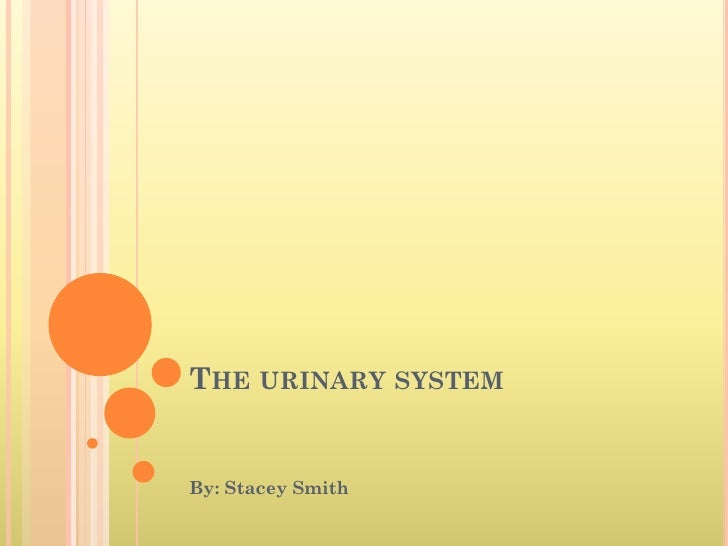 THE URINARY SYSTEM   By: Stacey Smith