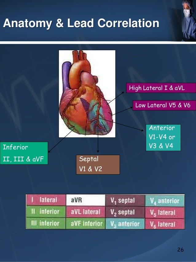the use of ekg to detect coronary ischemia ekg vectors explained ekg vectors explained