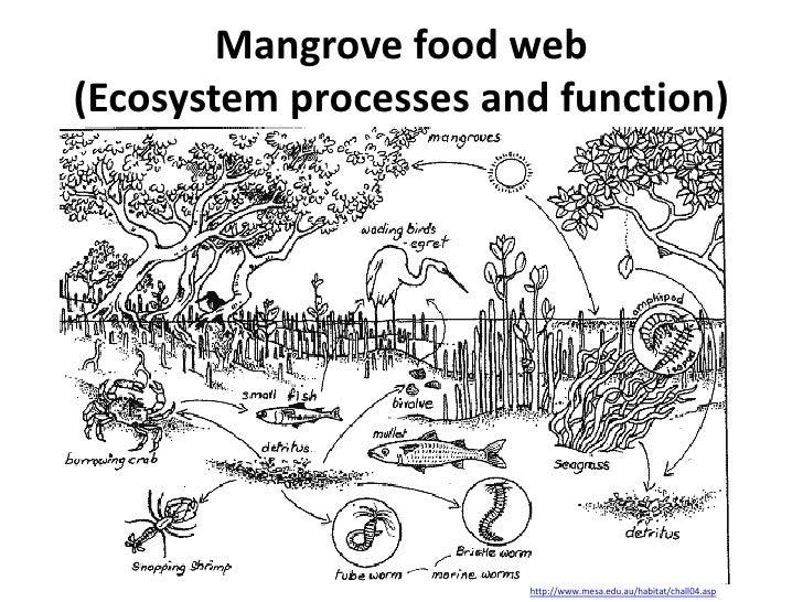 the value of estuarine and coastal ecosystems