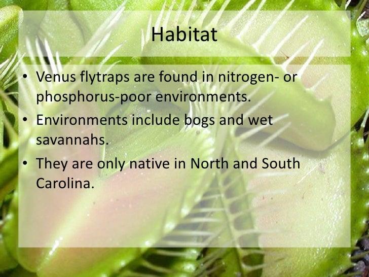 The venus flytrap Slide 3