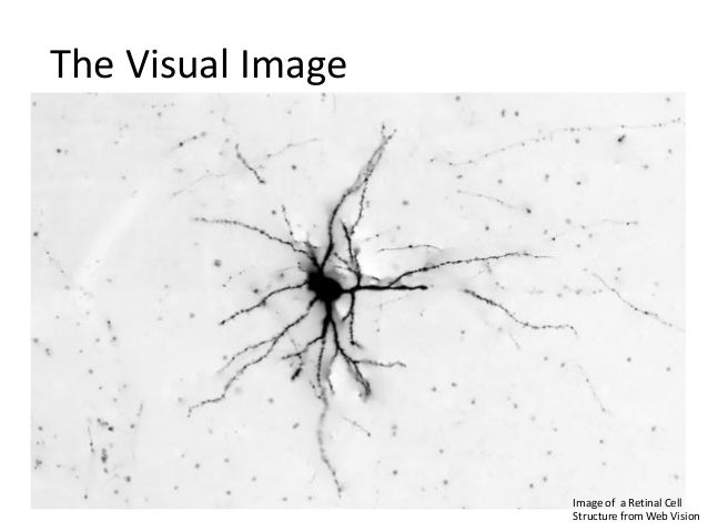 The Visual Image  Image of a Retinal Cell Structure from Web Vision