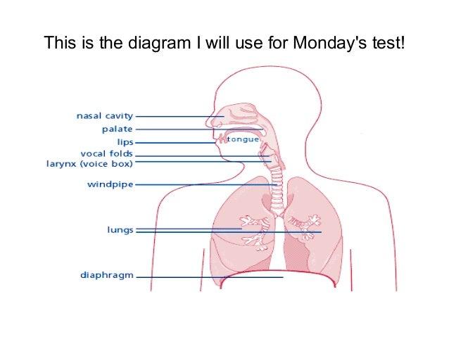 The Vocal MechanismSlideShare