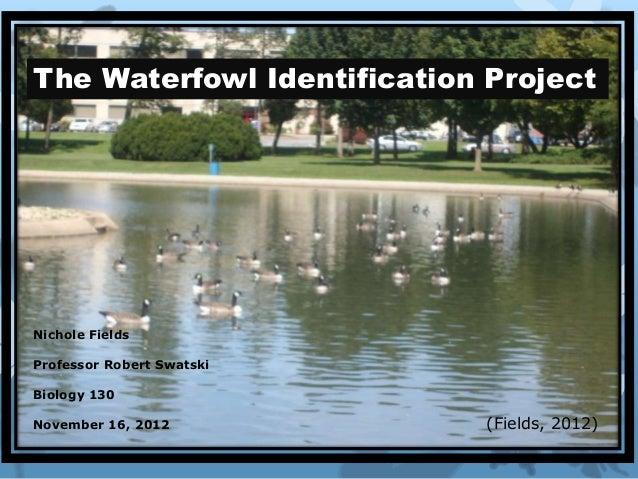 The Waterfowl Identification ProjectNichole FieldsProfessor Robert SwatskiBiology 130November 16, 2012           (Fields, ...