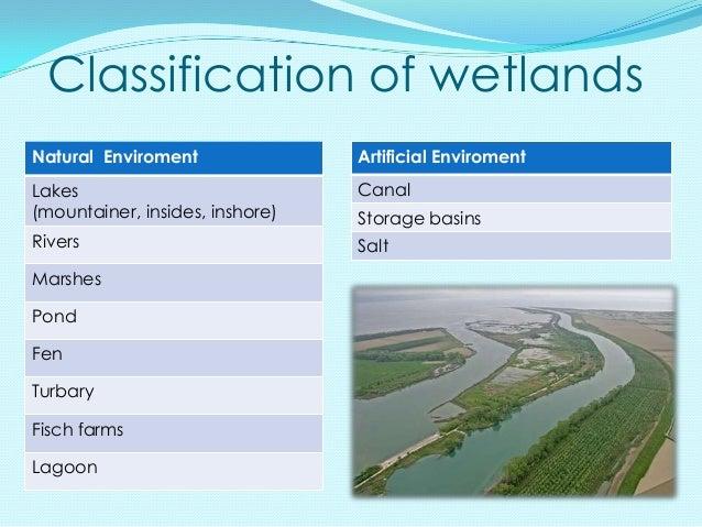Classification of wetlandsNatural Enviroment               Artificial EnviromentLakes                            Canal(mou...