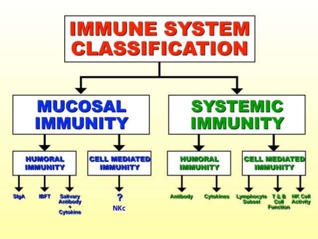 tuberculosis immune system and ongoing research Can the battle against tuberculosis gain from epigenetic research  a healthy immune system needs to be  a coopercell-mediated immune responses in tuberculosis.